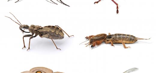 žuželke