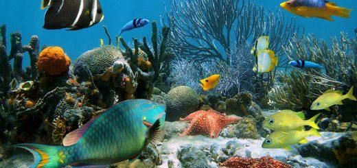 vodne živali