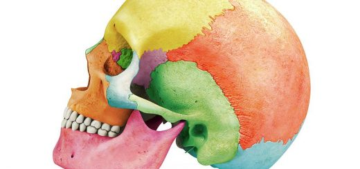 Kosti glave