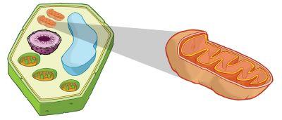 fotosinteza in celično dihanje