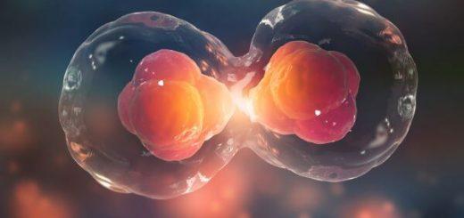 delitev celice